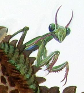 Menagerie – Mantis Detail