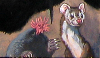 Menagerie – Star-nosed Mole & Weasel